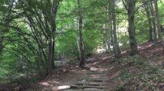 Il Sentiero delle Espressioni di Schignano